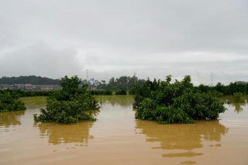 水利部部长:当前防汛关键期须突出抓好3个重点