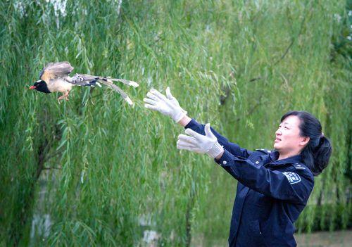 安徽省广德市野生动物保护剪影