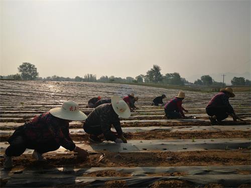 涞源西道沟有机庄园开启放心农产品即视耕种模式