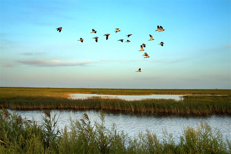 大凌河口生态修复项目顺利通过省级验收