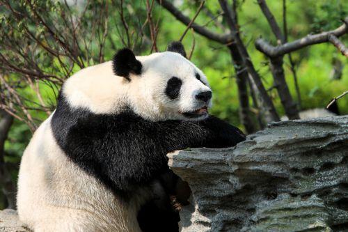 首届数字国际熊猫节开幕