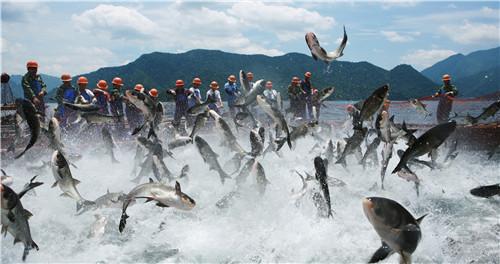 """千发集团:生态化保护下的""""绿色""""千岛湖保水渔业发展模式"""