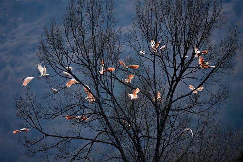 """保护生物多样性 绘就促进""""人与自然和谐共生""""新图景"""
